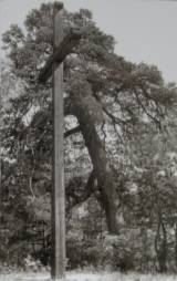 1962.jpg