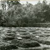 rettkau_uscianek_heldenfriedhof.jpg