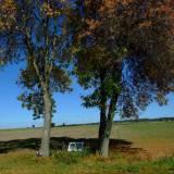 6174_pienice_20111002.jpg